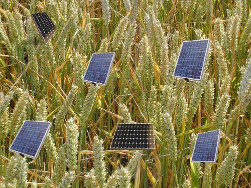 Wheat_DHWright-SolarPanels